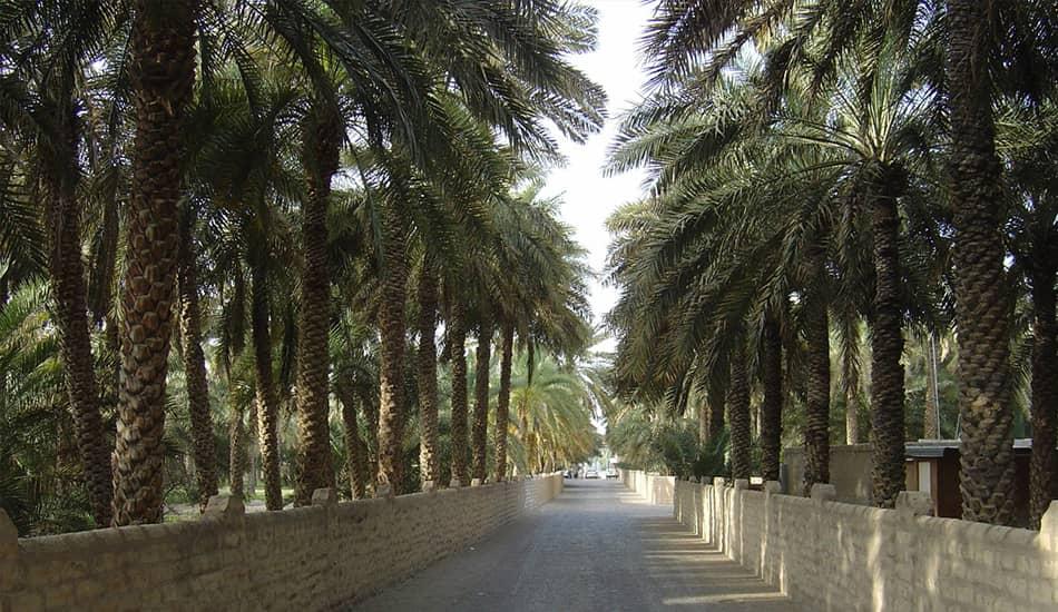 Al-Ain Oasis