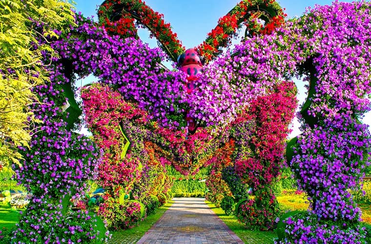 Butterfly Passage