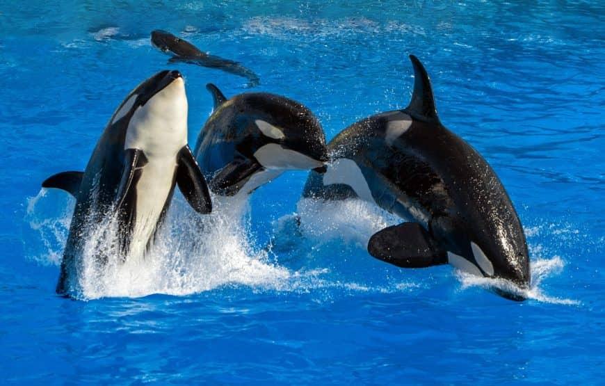 A complete guide on Dubai Dolphinarium