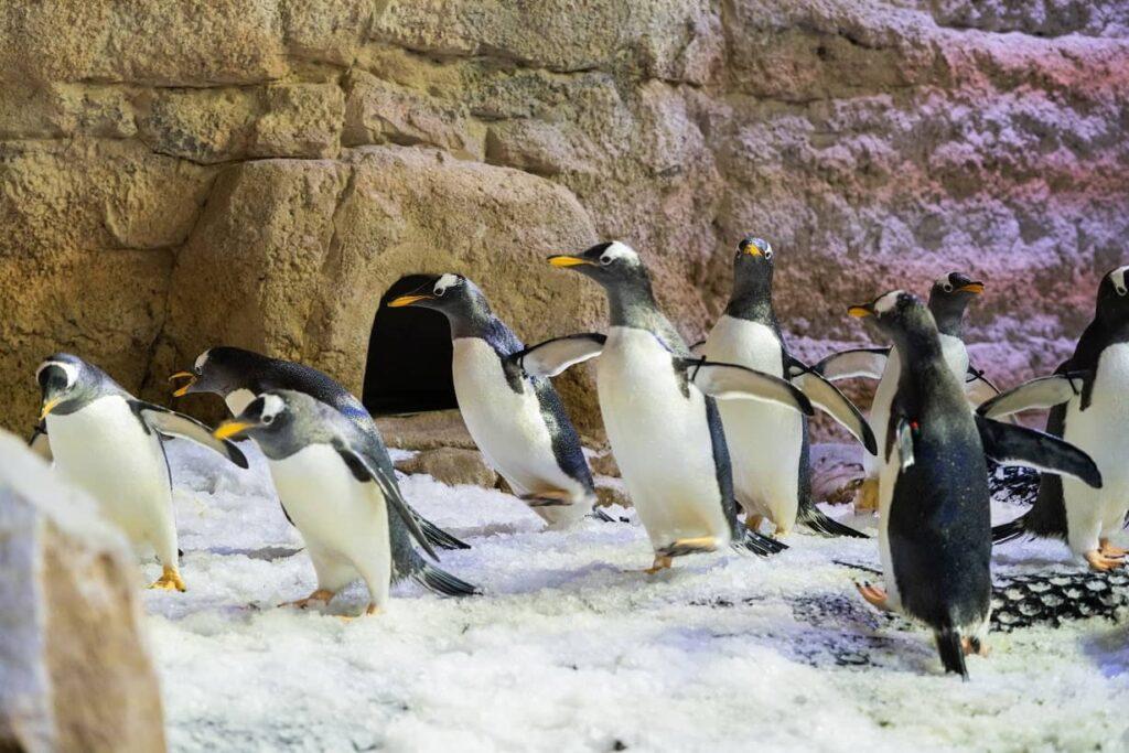 - Meet the Penguins: